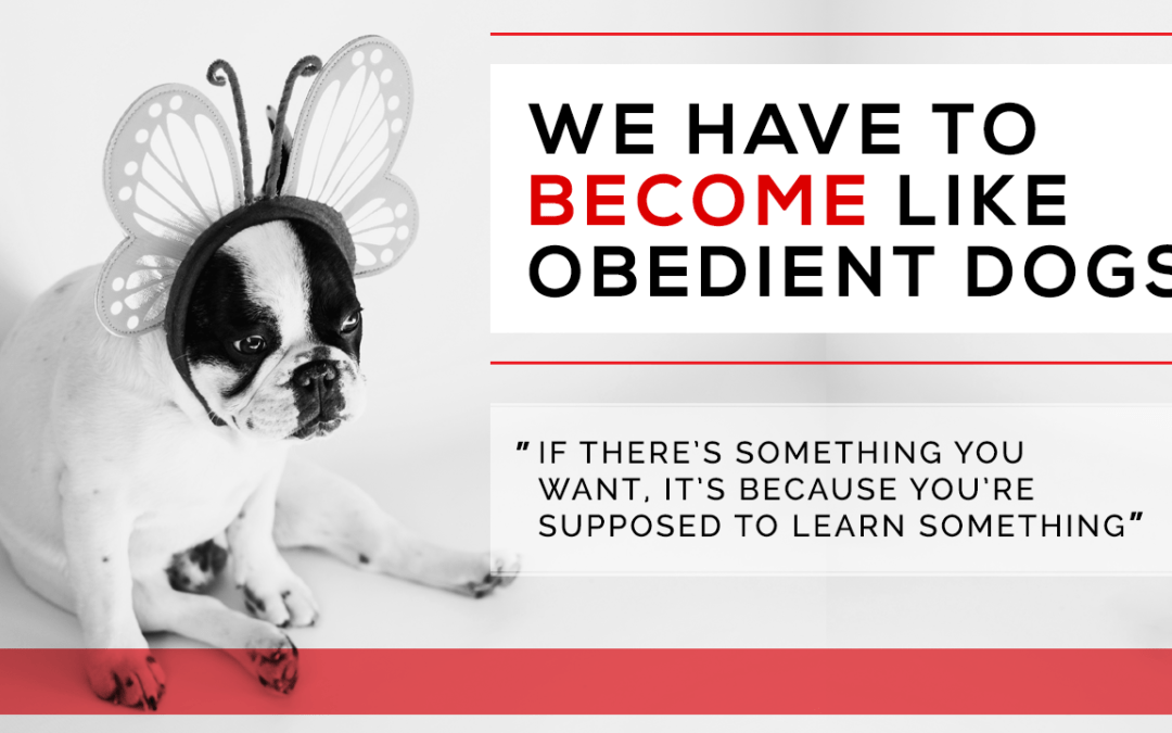 We Have to Become Like Obedient Dogs